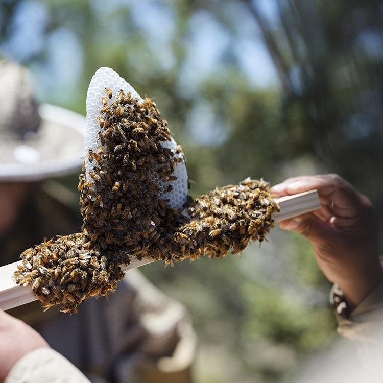 IAIA's Beekeeping Journey